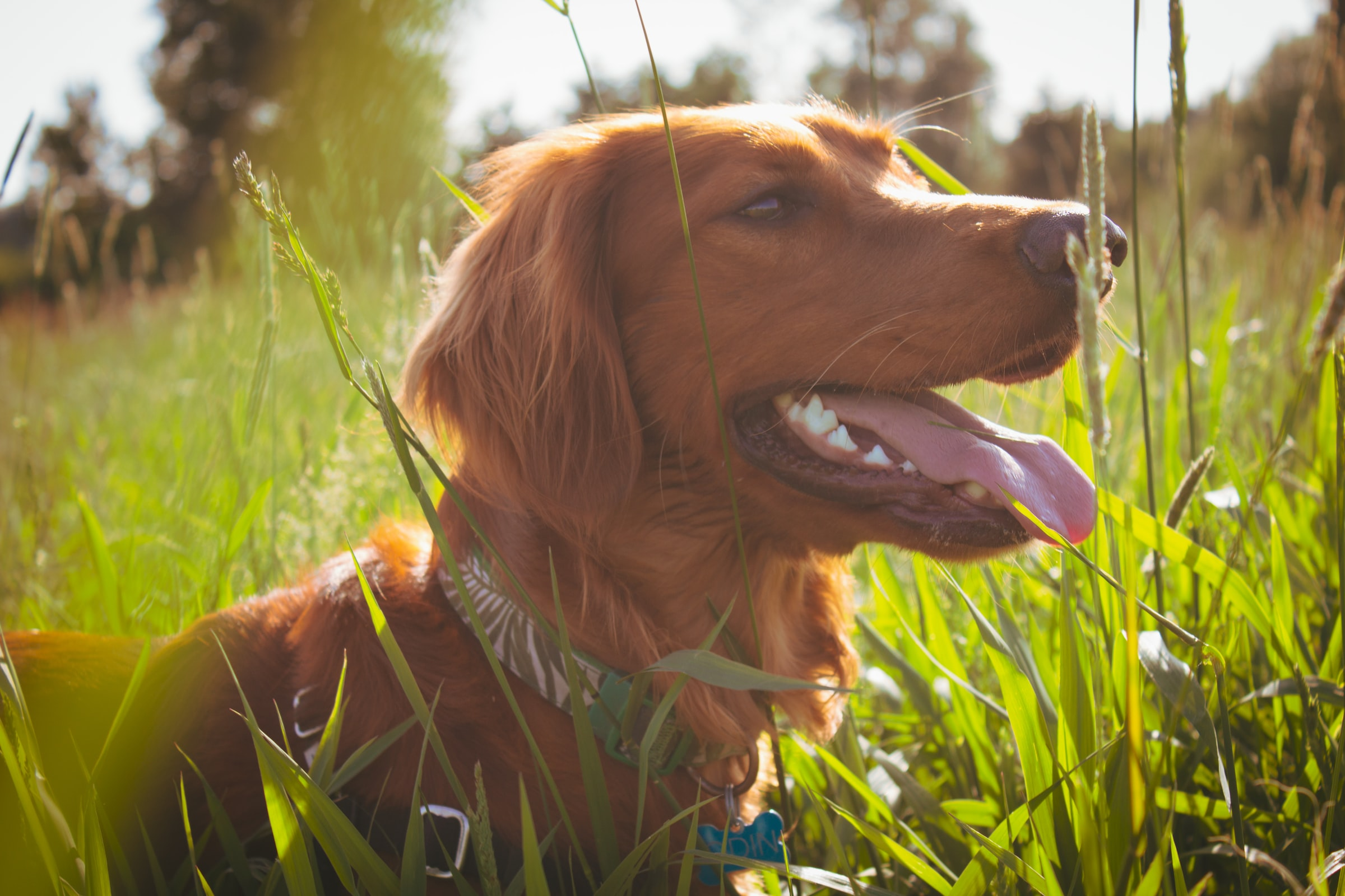 The Best Dog-Friendly Parks In Dublin